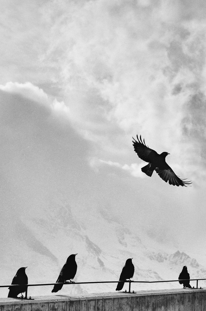 samuel-zeller-34761 birds