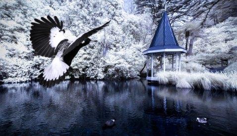 shontz-photography-2119 bird