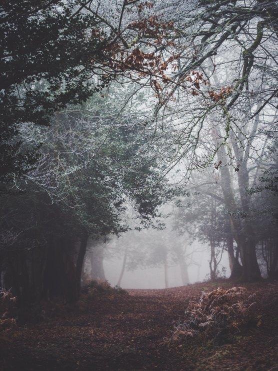 woods annie-spratt-207739-unsplash